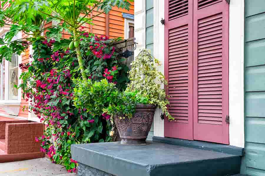 Colorful houses and plants in the New Orleans Garden District